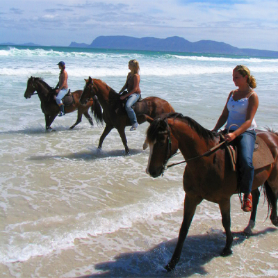 Journey on horseback across the pristine coastline of Hermanus, a ride encompassing both mountain and sea. Only R299 p/p!!