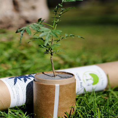 Adorable novelty gift! Tree in a Tube or Indoor Herb Garden - delivered to your door starting at R130!