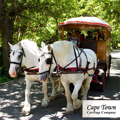Slow down and explore the history of Cape Town in style with the ultimate horse-drawn carriage trip around the City and Company gardens! R99 p.p!!