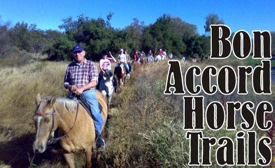 Experience an exhilarating Horse Ride in a picturesque setting with Bon Accord Horse Trails: A 1hr Horse Riding adventure for 2 adults for a mere R89 + bonus voucher (save 77%)