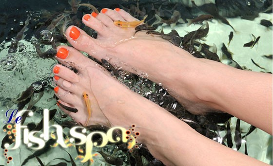 Step into summer with perfectly soft, rejuvenated feet, courtesy of Lefish Spa in Blouberg! Only R49 for a sensational 30-min Foot Fish Nibble Treatment plus a BONUS!