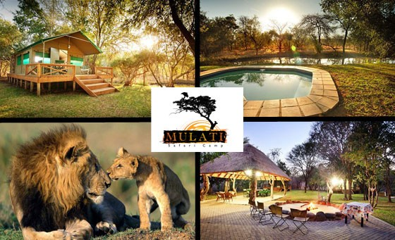 Treat your family to a true African safari adventure! For only R1499, enjoy a TWO-NIGHT stay for 4 ppl in a self-catering luxury tented camp, a voucher towards a BIG 5 Game Drive & more at Mulati Safari Camp in Limpopo