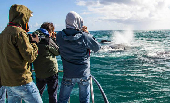 2 hour whale watching experience for 2 in Gansbaai