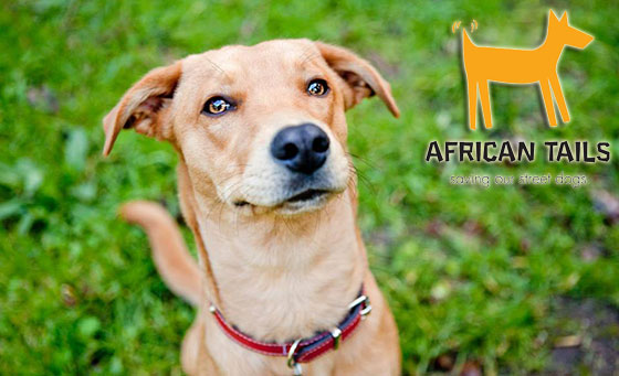 Donate R67 to African Tails this Mandela Day