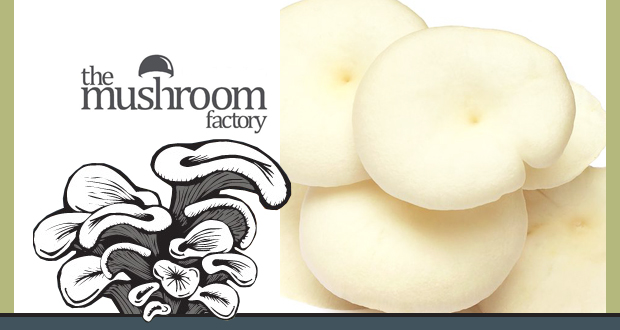 Grow your own mushrooms with a mushroom-growing kit from the Mushroom Factory for only R89 – includes delivery