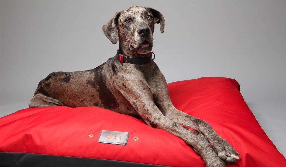 Plush Pet Beds, Leather Leashes & Collars From R99
