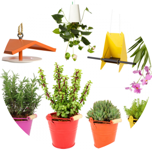Birdfeeders, Succulents & Planters that POP