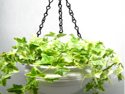 Pay R279 for a Ceramic Planter in matt white, including National Delivery (worth R499)