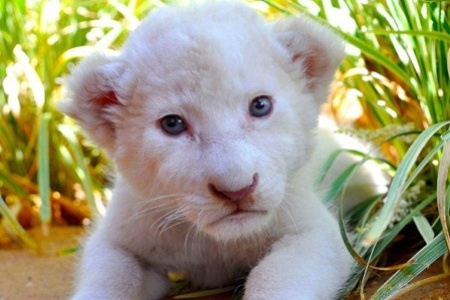 Explore the Outdoors: Lion Cub Interaction and Entrance into the Zoo at Mystic Monkeys and Feather Wildlife Park