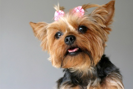 Grooming Services from Dog Salon