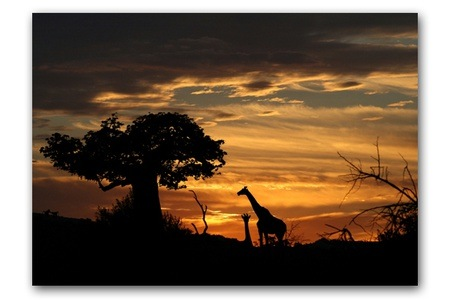Canvas Prints from Africa In Picture