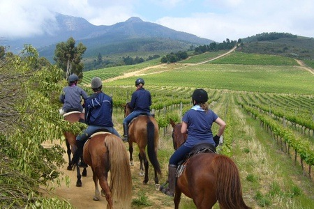 Two-Hour Outride and Wine Tasting at Alpha Equestrian