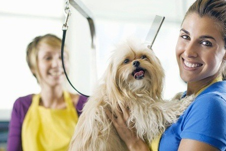 Holly and Hugo Online Dog Grooming Course for R199 (92% Off)