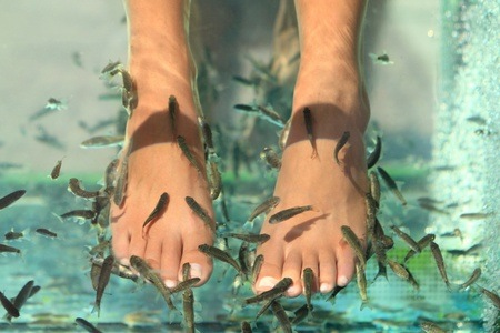 Choice of Pedicures with Fish Foot Nibbles and a Foot Massage at Le Fish Spa