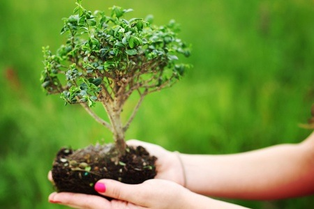 Bonsai Tree with a Beginners Care Course From R144 at Bonsai Boyz (Up to 65% Off)