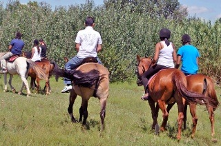 Horse Riding Experience from R350 with Happy Hooves (Up to 52% Off)