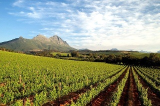 Accommodation and Two-Course Lunch with Wine from R639 at Delvera (Up to 55% Off)