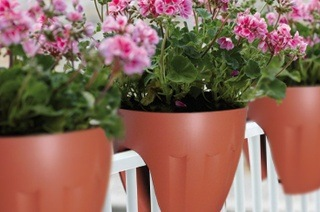 Two Small Terracotta Flower Pots for R269 Including Delivery (46% Off)