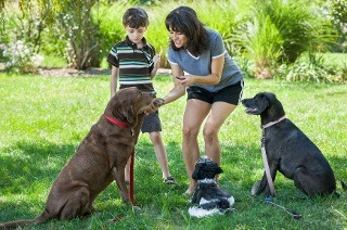 Dog Psychology Course for R199 (89% Off)
