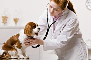 Veterinary Assistant Course for R544 with Pet Addict (90% Off)