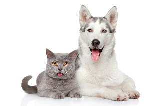 Pet Grooming Services from R62.50 at Exclusive Pets Grooming Parlour (50% Off)