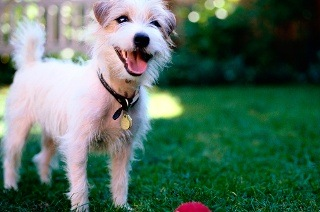 Vouchers from Quantum Pets Online from R100 (50% Off)