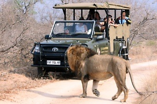 African Getaway: Two-Night Johannesburg to Kruger National Park Safari with African Eagle
