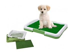 Pet's Potty Patch for R250 Including Delivery (58% Off)