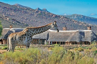 Buffet Lunch and Day Trip Safari from R650 at Aquila Private Game Reserve (50% Off)