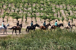 Horse Riding Trail with Wine Tasting Experience from R499 with Nika's Riding Centre @ Bon Equine Stables (Up to 65% Off)