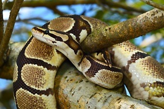 Entry Tickets from R25 to Reptile Garden (Up to 55% Off)