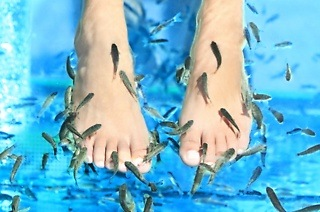 Fish Foot Nibble from R90 with Optional Pedicure at Le Fish Spa (Up to 61% Off)