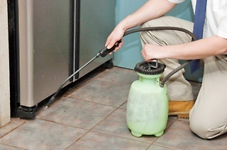 Pest Control from R375 with Leap Pest Control (Up to 50% Off)