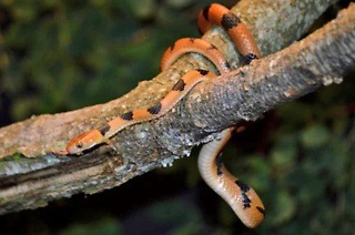 Entrance to Ndlondlo Reptile Park from R40 (Up to 54% Off)