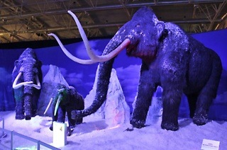 Tickets to the Ice Age Exhibition from R59 with Huisgenoot, YOU and Drum magazine (Up to 41% Off)
