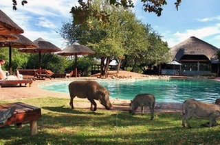 Bela-Bela: One or Two-Night Semi Self-Catering Stay for Two Including Breakfast & Amenities at Mabalingwe Nature Reserve
