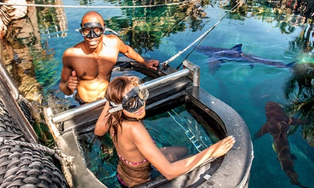 Snorkelling, Shark-Cage Diving or Ocean Walking for Two from R170 at Ushaka Marine World