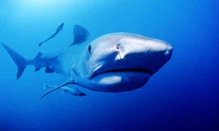 Extreme Shark Dive from R1 499 for One at African Watersports (27% Off)