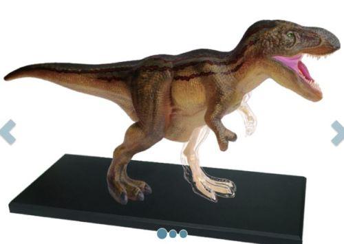Science Educational T-Rex Dinosaur Skeleton Animal Anatomy