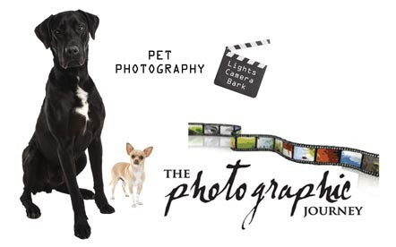 Lights! Camera! Bark! My Pet and Me Photo Shoot for only R199 at The Photographic Journey, located in Willowbridge, Tygervalley.