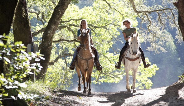 Horse Riding for 2, or a Romantic Couples Horse Riding Adventure including a Bottle of Wine & a Picnic Basket.