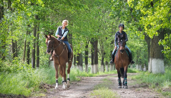 A Scenic Horseback Trail Experience for 2 People at Silvermist!