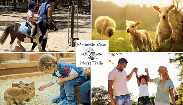 The Family Farm Adventure for 2 Adults & 2 Kids! Entrance Passes to the Petting Zoo, Pony Rides and Farm-style Snack Boxes with Sodas!