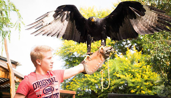 Eagle Encounters at Spier Wine Farm: Entrance Passes, Animal Interactions, Show Passes & a Personal Encounter with Wally, the Wahlberg's Eagle!