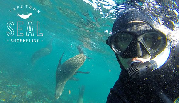 Seal Snorkeling Cape Town: Snorkel with the Seals for up to 2 People!