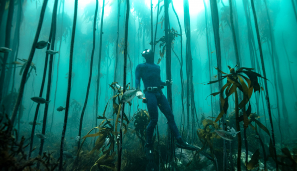 Join Marine Biologists on a Kelp Forest Snorkel Adventure with a Fish & Shark (harmless) Identification – NO Dive Experience Needed!