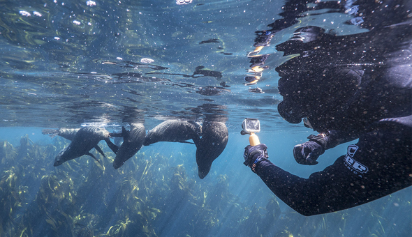 Seal Snorkeling with Animal Ocean Expeditions!