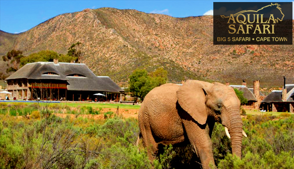 Aquila Private Game Reserve: A 2 Night Weekend Stay for 2 People in a Karoo Cottage, including Welcome Drinks, Breakfast Buffet, Lunch Buffet, Dinner Buffet and 2 Game Drives!