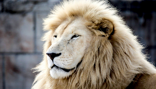Vredenheim Big Cats Park: Entrance Tickets for 2 People, including a Wine Tasting Experience!