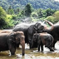 Thailand - For the Adventurous : 3 Star ex Durban : Let's Explore! Return flights from Durban. Approximate taxes. Arrival and departure transfers. 3 nights' accommodation in Phuket at the 3-star Sunset Beach Resort in a Superior Room with breakfast. 2 nights' accommodation on a Jungle Lake Safari (1